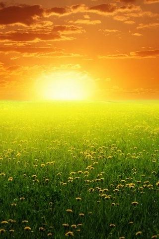 Sunshine's