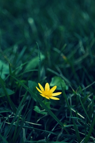 Small-Yellow-Flower