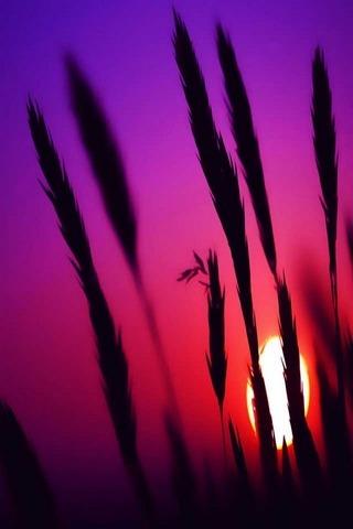 พระอาทิตย์ตกสีชมพู
