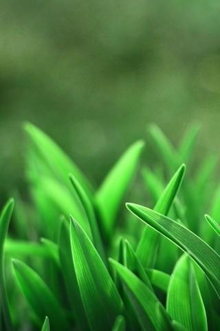 Leaves-Closeups