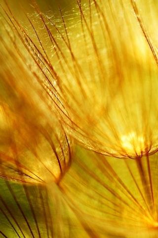 Golden Fluff