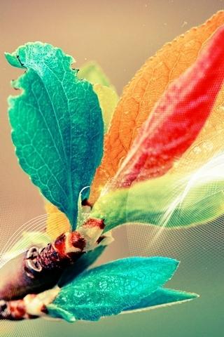 Renkli yaprakları