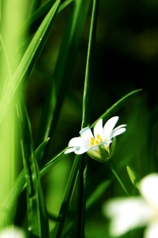 Grass And White Flowers
