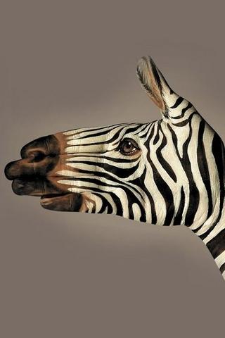 Zebra Painted