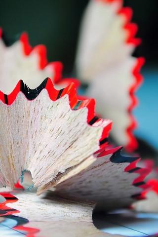Pencil-flower