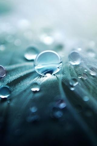 Pure Dew