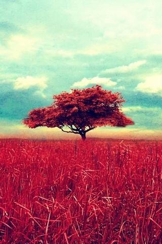 Винтажное дерево