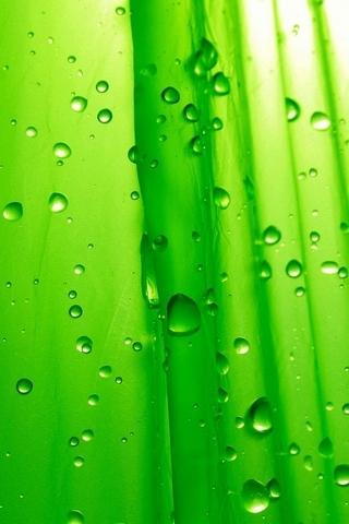 Yeşil damla