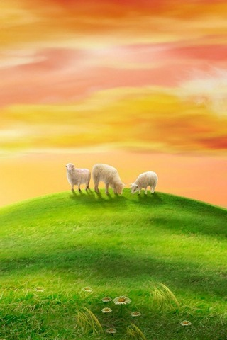 Sheep Scenery