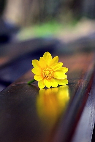 Flower On Bench