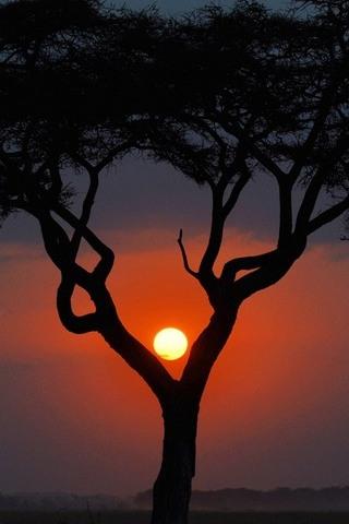 Different-Sunset