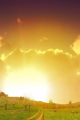 Поле Захід сонця