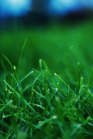 Grass-Closeups