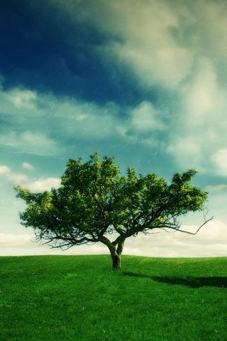Summer-Landscape