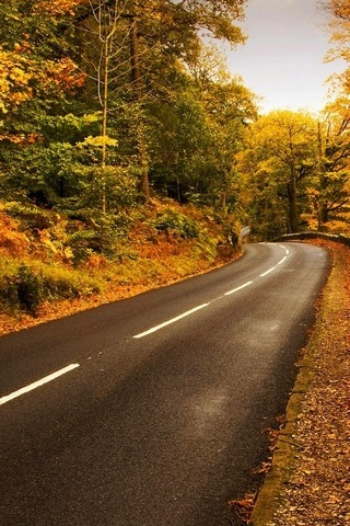 Autumn-highway