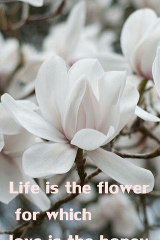 인생은 꽃이다.