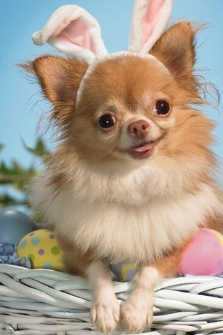 Funny Doggy Wishes You A Happy Easter