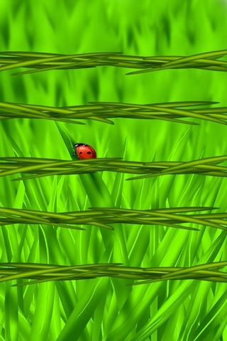 Lady Bug - Grass Shelves (IP5)