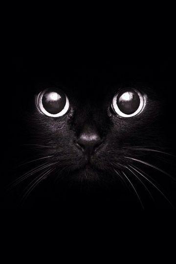 काली बिल्ली