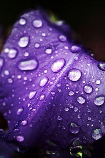 Macro de fleur de nature