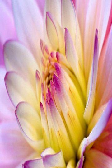 Great Flowers