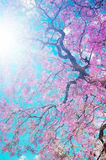 春天开花阳光