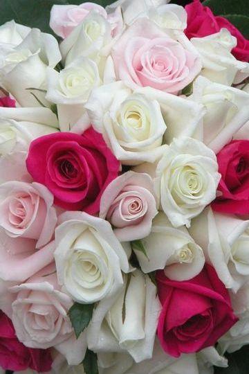 Çiçek Hd Duvar Kağıdı