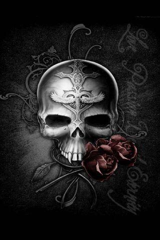 Seni Skull