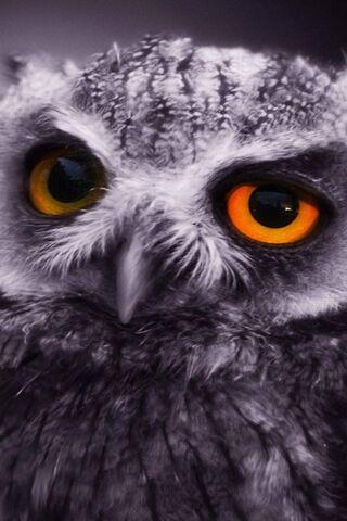 Глаз совы