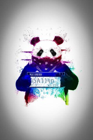 Colorful Bear Wall