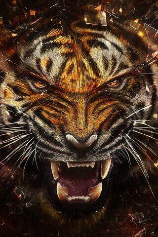 Tiger Through Glass