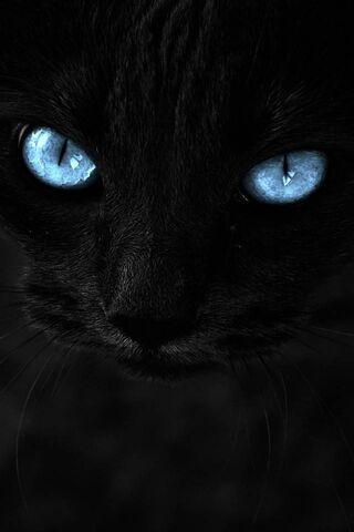 Mata Kucing Biru