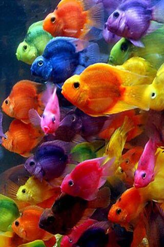 सुंदर मछली