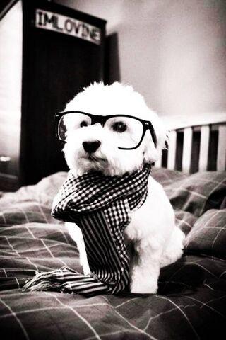 Stylish Dog