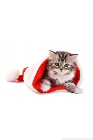 Navidad gato invierno