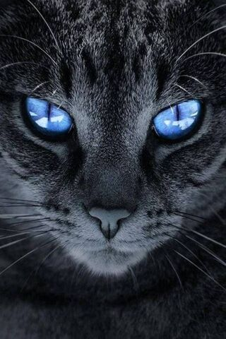 Kucing Dengan Mata Biru