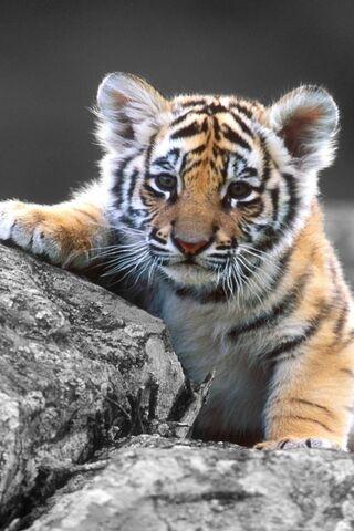 طفل لطيف النمر