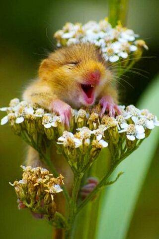 웃긴 다람쥐