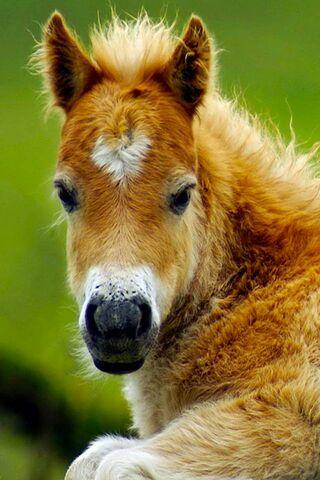 Jim-Cute Foal
