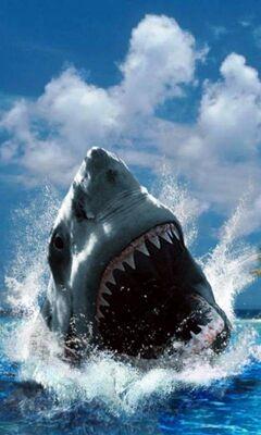 Requin Fond D Ecran Telecharger Sur Votre Mobile Depuis Phoneky