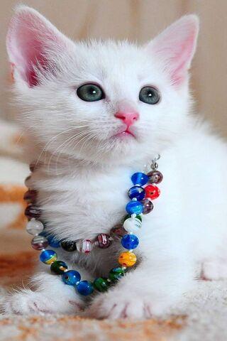 Wonderful Cat