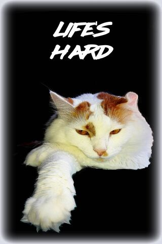 Cat Life Is Hard
