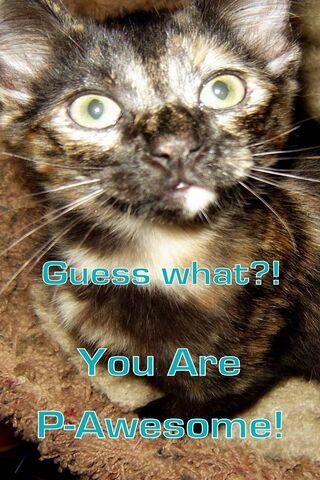 你是P-Awesome Cat