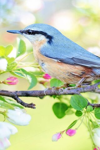 Beautiful Bird Tree