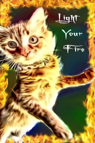 Rozpal swojego kota ognia