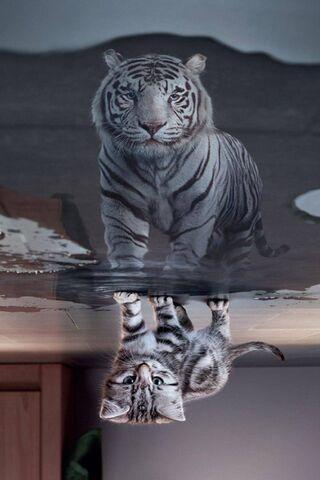 Lion Or A Cat