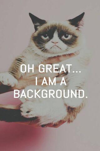 Cat Grumpy 1