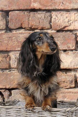 Sad Pup