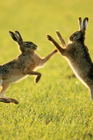 Rabbit Fight