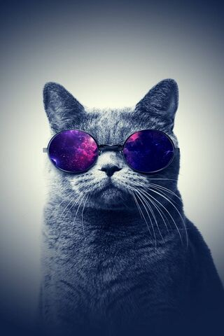 Cool Cat Glasses